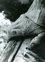 hand of a Lake Superior fisherman, photographed by Peter Oikarinen